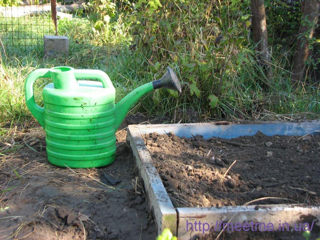 хорошенечко поливаем землю на грядке