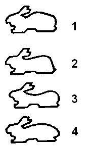 Недостатки спины и крупа у кроликов